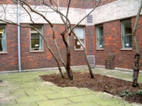 The courtyard prior to the EHE project