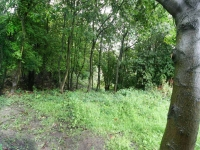 The wooded area before the project